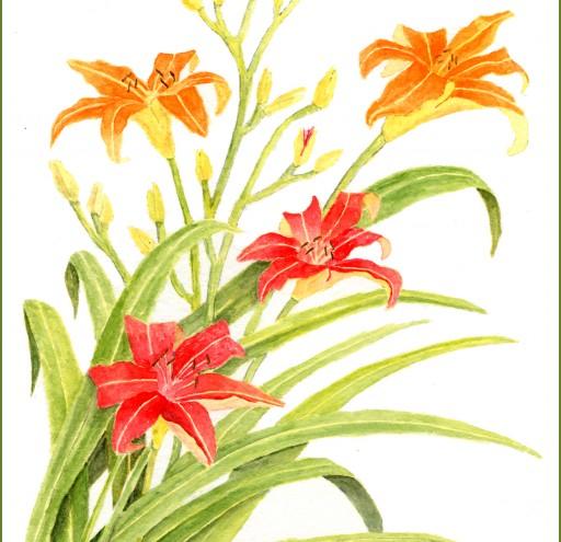 4 daylilies